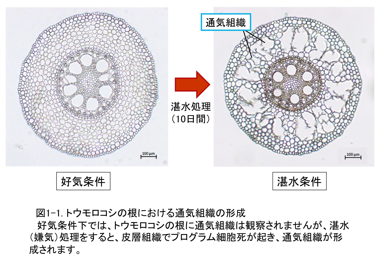 細胞 死 プログラム